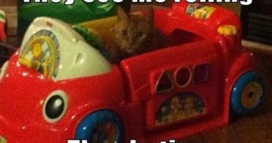 They See Me Rolling - Cat humor
