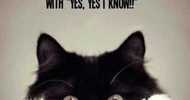 Things Crazy Cat People Do - Cat humor
