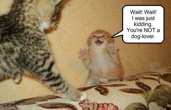 Wait! Wait! I Was Just Kidding - Cat humor