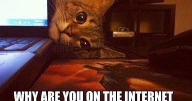 Curious Cat - Cat humor