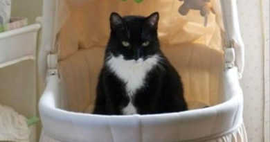 Yes, The Baby Is Here - Cat humor