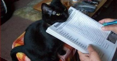 I Interrupt Your Leisure - Cat humor