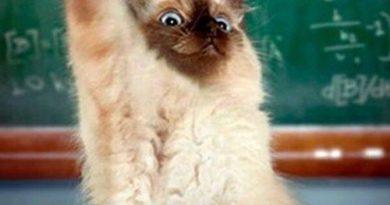 Pick Me! Pick Me! - Cat humor
