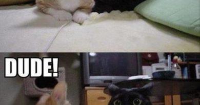 A Polite Cat - Cat humor