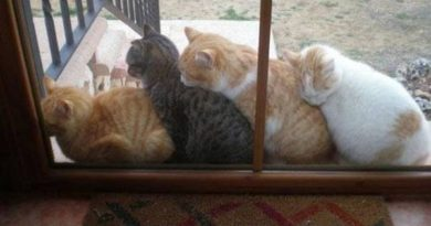 All Aboard - Cat humor