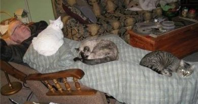 Cat Blanket - Cat humor