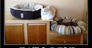 Cat Logic - Cat humor