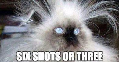 I Can't Decide - Cat humor