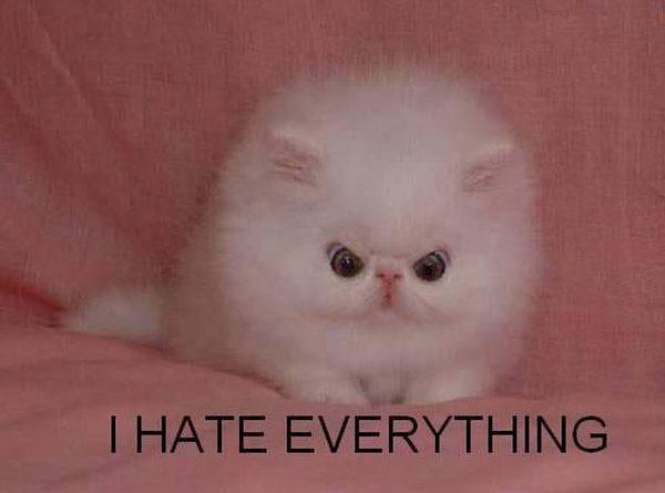 Cute Little Hater - Cat humor