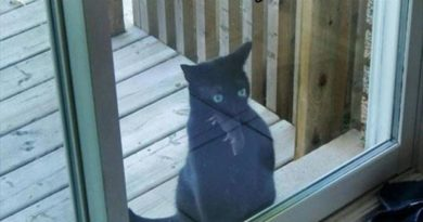 Dammit Human, Let Me In - Cat humor