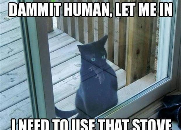 Dammit Human, Let Me In - Cat humor