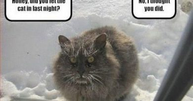 Did You Let The Cat In? - Cat humor