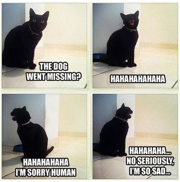 The Dog Went Missing? - Cat humor