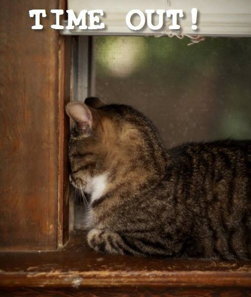 Time Out! - Cat humor