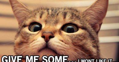 Hey! Whatcha Eatin? - Cat humor