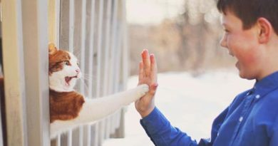 High Five Human - Cat humor