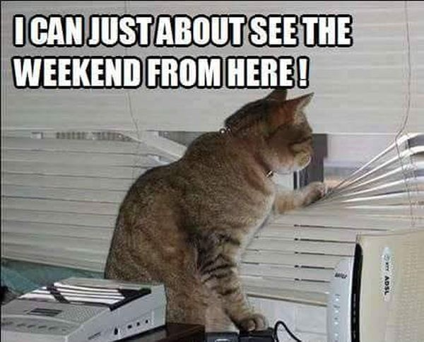 2 besides Cat9 together with Yup I Can See The Weekend together with Hi There furthermore Night Pirates Quiet As Mice Stealthy As. on cat window bed