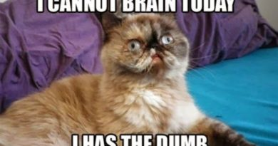 I Cannot Brain Today - Cat humor