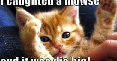 A Big Mowse - Cat humor
