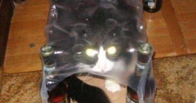 I Dare You - Cat humor