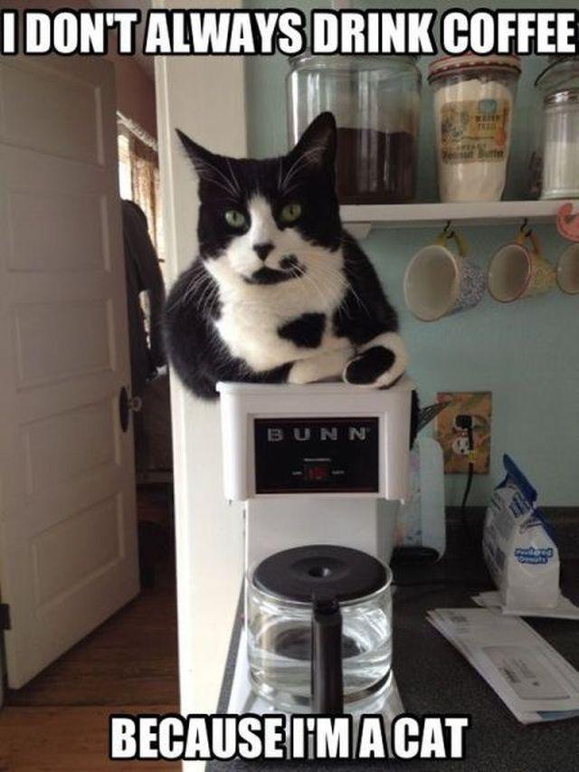 Cat Making Tea