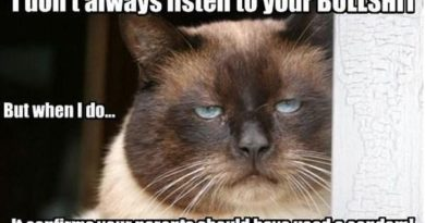 I Don't Always Listen To Your Bulshit - Cat humor