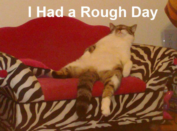 I Had a Rough Day - Cat humor