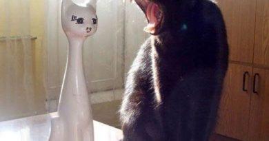 I Said... - Cat humor