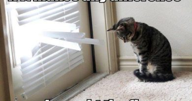 If IT Makes Any Difference - Cat humor