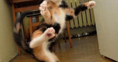 Karate Kitty - Cat humor