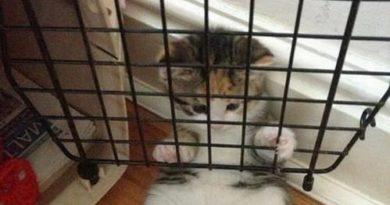Let Meowt! - Cat humor