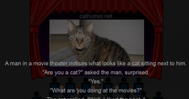 Meanwhile In Movie Theater - Cat humor