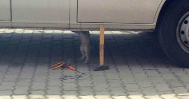 Cat Mechanic - Cat humor