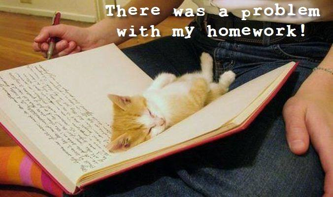 Problem With Homework - Cat humor
