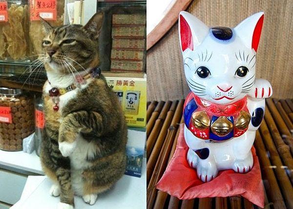 Real Life Welcoming Cat - Cat humor