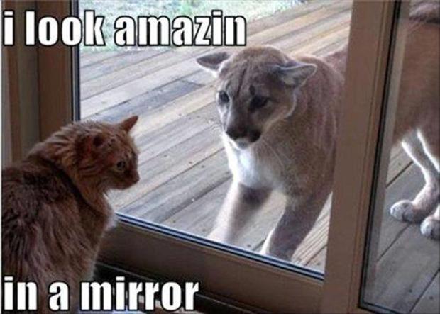 Self Confidence Level - Cat - Cat humor