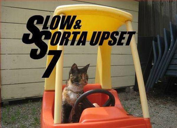Slow & Sorta Upset 7 - Cat humor