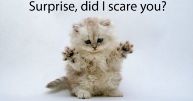 Surprise! - Cat humor