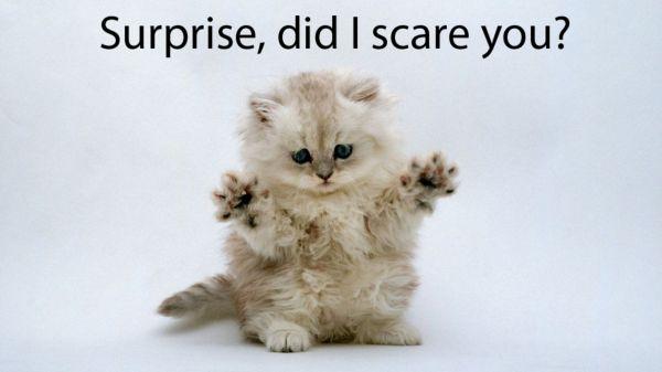 Surprise! - Cat humor