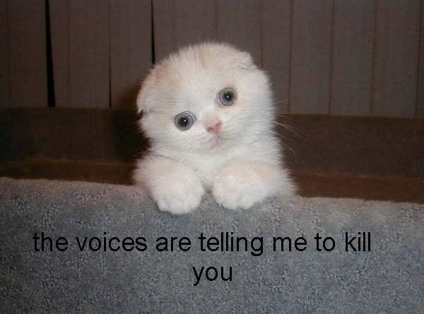 The Voices Are Telling Me... - Cat humor