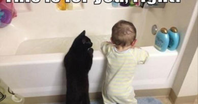 This Is For You, Right? - Cat humor