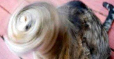 Tornado Cat - Cat humor