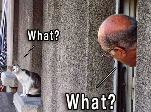 What? - Cat humor