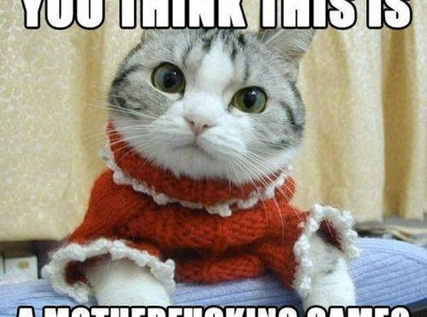 What Do You Think? - Cat humor
