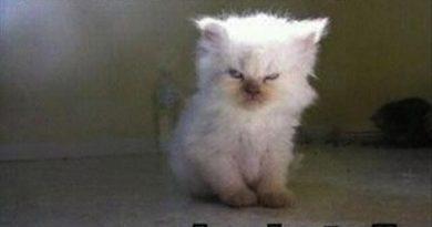 Whoever Woke Me Up... - Cat humor
