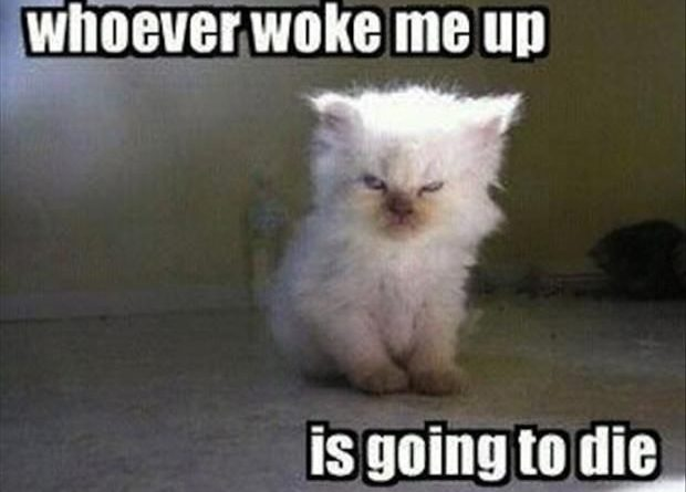 Whoever Woke Me Up... - Cat humor