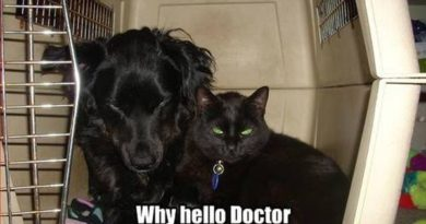 Why Hello Doctor! - Cat humor