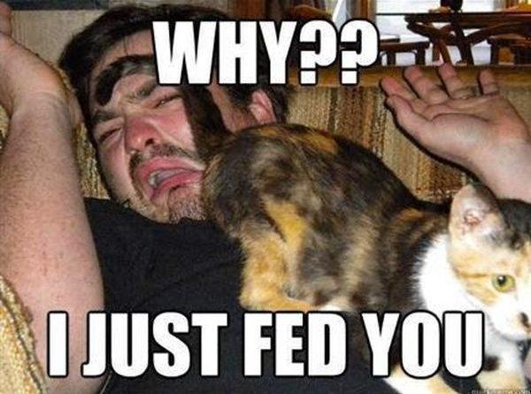 Why?? - Cat humor