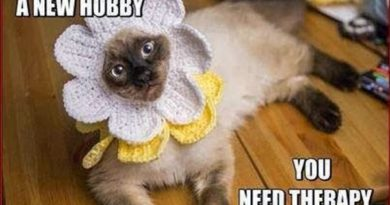 You Don't Need A New Hobby - Cat humor