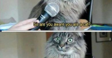 Cat Interview - Cat humor
